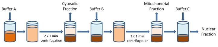 Cell Fractionation Kits