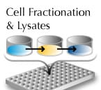 Cell fractionation kits and lysates