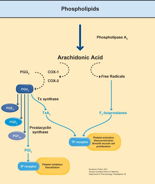 genetics of steroid resistant nephrotic syndrome