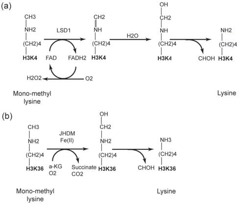 Oxidative Amination Mechanism Amine Oxidation Reaction
