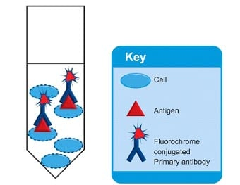 Intracellular Flow Cytometry Summary