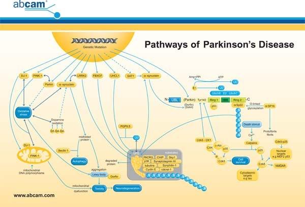 Parkinson S Disease Pathway Card