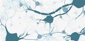 Neuroscienceポータル