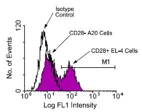 Flow Cytometry - CD28 antibody [PV-1] (FITC) (ab24844)
