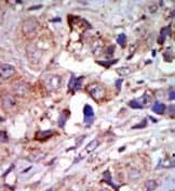Immunohistochemistry (Formalin/PFA-fixed paraffin-embedded sections) - Anti-MAP3K12 antibody (ab37996)