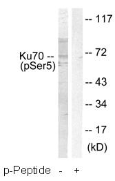 Western blot - Ku70 (phospho S5) antibody (ab61783)