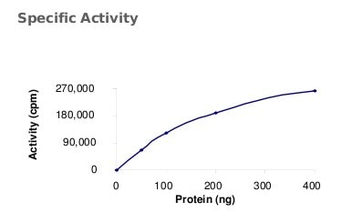 Functional Studies - PKR protein (Active) (ab71666)