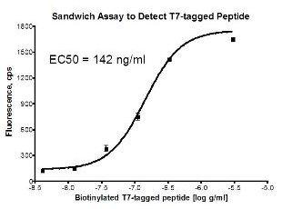 Sandwich ELISA - Anti-T7 tag® antibody (Phycoerythrin) (ab72563)