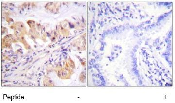 Immunohistochemistry (Formalin/PFA-fixed paraffin-embedded sections) - p23 antibody (ab74111)