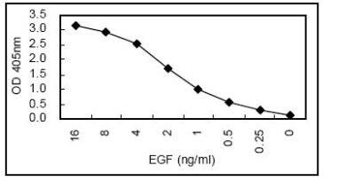 ELISA - EGF antibody [KT2] (HRP) (ab106489)