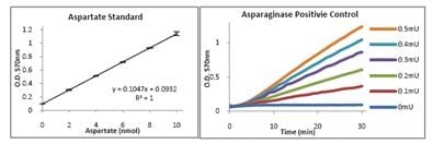 Functional Studies - Asparaginase Activity Assay Kit (ab107922)