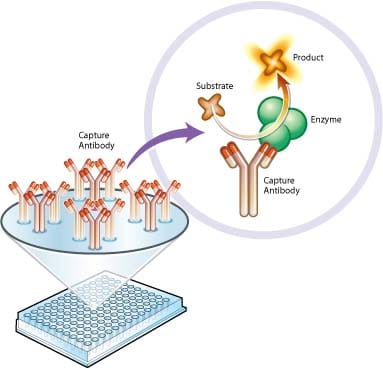 Functional Studies - Complex IV Human Enzyme Activity Microplate Assay Kit (ab109909)