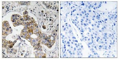 Immunohistochemistry (Formalin/PFA-fixed paraffin-embedded sections) - KCNK15 antibody (ab109985)