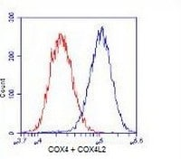 Flow Cytometry - COX4 + COX4L2 antibody [10G8D12C12 ] (ab110261)