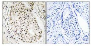 Immunohistochemistry (Formalin/PFA-fixed paraffin-embedded sections) - HNRNPUL2 antibody (ab111176)
