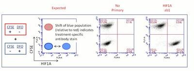 - CFSE - Cell Labeling Kit (ab113853)