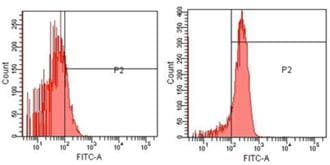 Flow Cytometry - Anti-ERK1 + ERK2 antibody (ab115799)