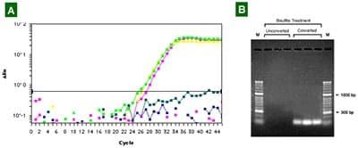 Functional Studies - DNA modification Kit (ab117127)