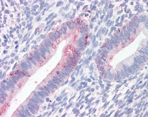 Immunohistochemistry (Formalin/PFA-fixed paraffin-embedded sections) - Anti-Prominin 2 antibody (ab118492)