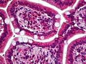 Immunohistochemistry (Formalin/PFA-fixed paraffin-embedded sections) - Anti-NMDAR2A antibody (ab118587)
