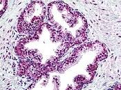 Immunohistochemistry (Formalin/PFA-fixed paraffin-embedded sections) - Anti-Suppressor of Fused antibody (ab118596)