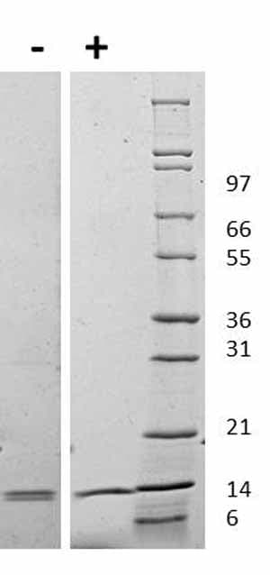 Other-IL31 protein (Mouse)(ab119155)
