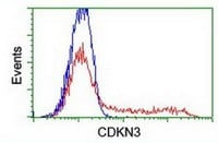 Flow Cytometry - Anti-CDKN3 antibody [2H10] (ab119242)