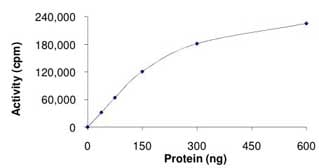 Functional Studies - Active mouse JNK3 full length protein (ab119734)