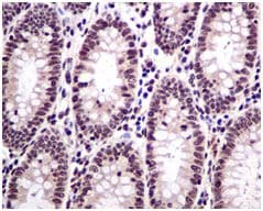 Immunohistochemistry (Formalin/PFA-fixed paraffin-embedded sections) - Anti-HMGN2 antibody [EPR7091] (ab124997)