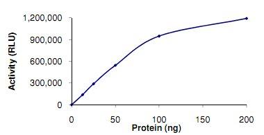 Functional Studies - PIP5K1 beta protein (Active) (ab125547)