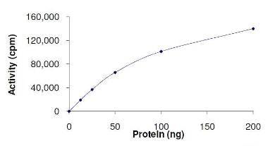 Functional Studies - HIPK2 protein (Active) (ab125553)