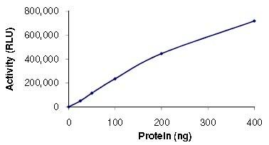 Functional Studies - PI3 Kinase p110 beta protein (Active) (ab125571)
