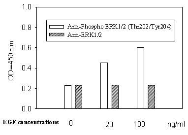 In-Cell ELISA - ERK1/2 (Thr202/Tyr204) In-Cell ELISA Kit (ab126423)