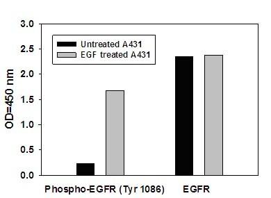 Sandwich ELISA - EGFR (pY1086) + total EGFR ELISA Kit (ab126441)