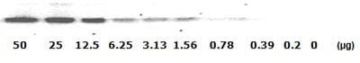 Western blot - STAT1 (pY701) ELISA Kit (ab126456)
