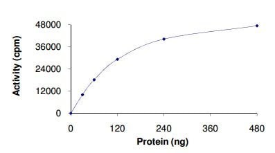 Functional Studies - CKI gamma 3 protein (Active) (ab126925)