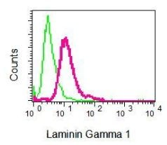 Flow Cytometry - Anti-Laminin gamma 1 antibody [EPR8217] (ab134059)