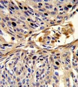 Immunohistochemistry (Formalin/PFA-fixed paraffin-embedded sections) - Anti-APEX2 antibody (ab135742)