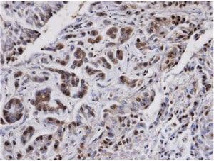 Immunohistochemistry (Formalin/PFA-fixed paraffin-embedded sections) - Anti-PP2A alpha + beta antibody (ab137849)
