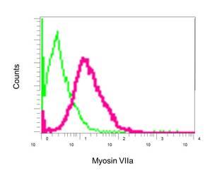 Flow Cytometry - Anti-Myosin VIIa antibody [EPR7497] (ab150386)
