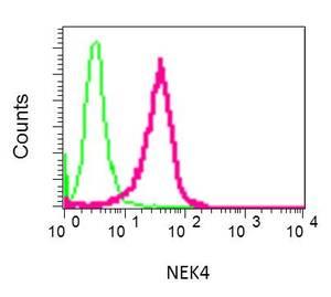 Flow Cytometry - Anti-NEK4 antibody [EPR8462] (ab150438)