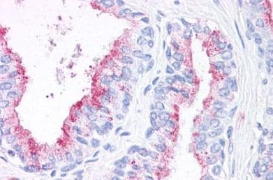 Immunohistochemistry (Formalin/PFA-fixed paraffin-embedded sections) - Anti-Wnt5b antibody (ab150602)