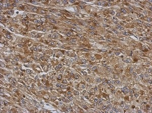 Immunohistochemistry (Formalin/PFA-fixed paraffin-embedded sections) - Anti-TMCO3 antibody (ab154581)