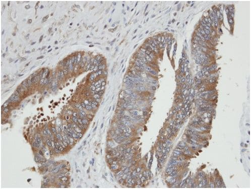 Immunohistochemistry (Formalin/PFA-fixed paraffin-embedded sections) - Anti-PGK2 antibody (ab154608)