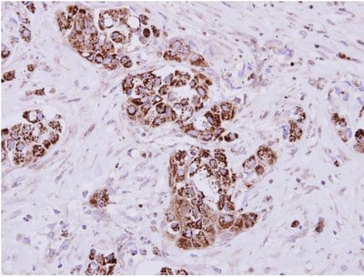 Immunohistochemistry (Formalin/PFA-fixed paraffin-embedded sections) - Anti-MIOX antibody (ab154639)