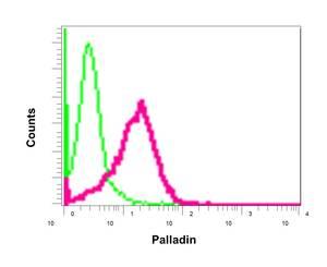 Flow Cytometry - Anti-Palladin antibody [EPR9460(B)] (ab154827)