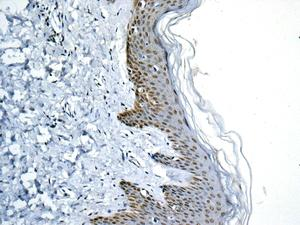 Immunohistochemistry (Formalin/PFA-fixed paraffin-embedded sections) - Anti-GLYR1 antibody [EPR10076(B)] (ab154838)
