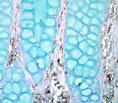 Immunohistochemistry (Formalin/PFA-fixed paraffin-embedded sections) - Anti-PTPN12 antibody - N-terminal (ab154892)