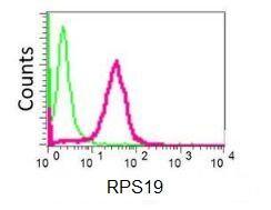 Flow Cytometry - Anti-RPS19 antibody [EPR10422] (ab155994)