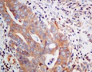 Immunohistochemistry (Formalin/PFA-fixed paraffin-embedded sections) - Anti-Syntaxin 18 antibody [EPR8939] (ab156017)